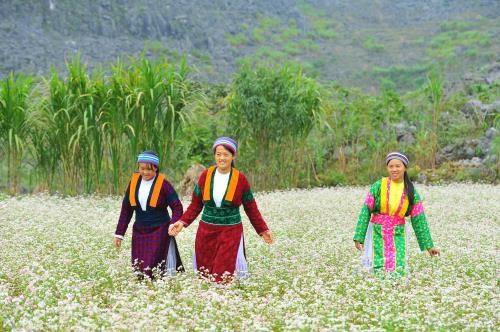 Ha Giang province awaits tourism boom hinh anh 1