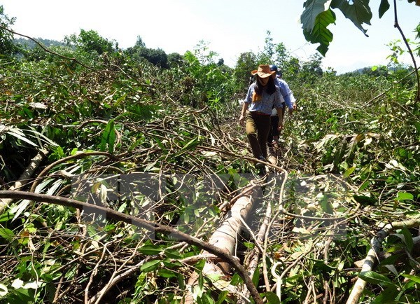 Halt proposed to projects linked to forest land use change in Phu Yen hinh anh 1