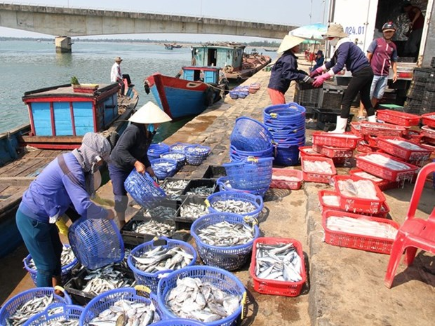 Exports of aquatic products estimated at 4.3 bln USD hinh anh 1