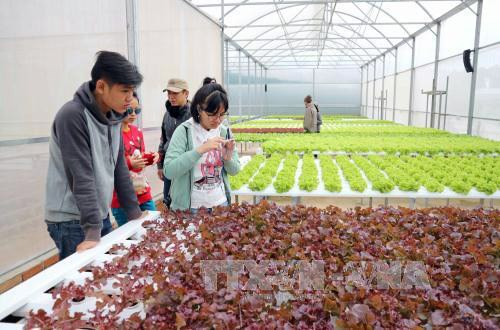 Lam Dong to set up 11 sustainable agriculture production chains hinh anh 1