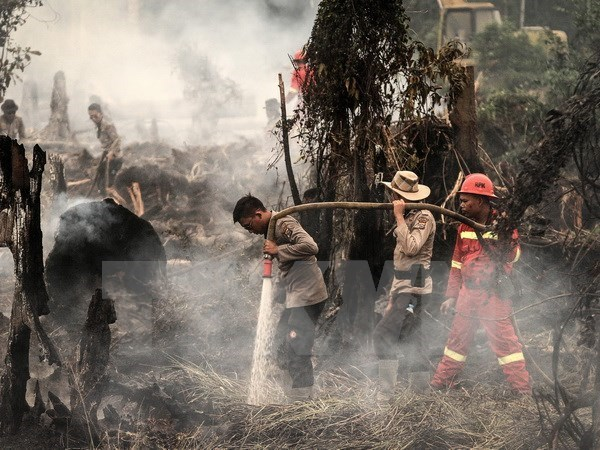 Malaysia ready to assist Indonesia in battling forest fires hinh anh 1