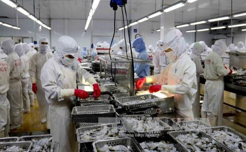 Seafood exports estimated at 8 bln USD in 2017 hinh anh 1