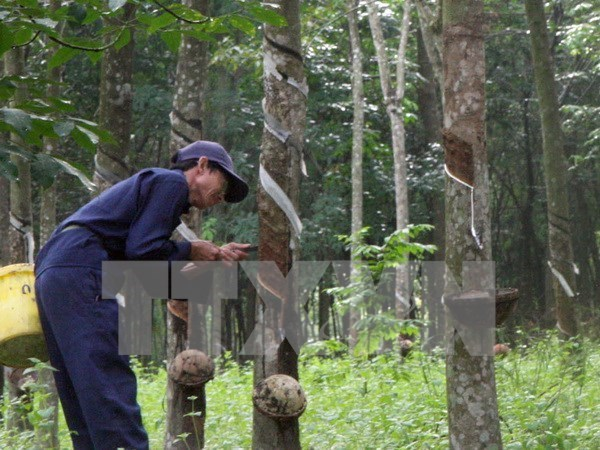 Thailand promotes use of rubber hinh anh 1