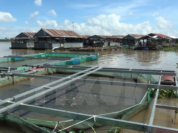 Thua Thien – Hue's farmed fish, seafood output surges hinh anh 1
