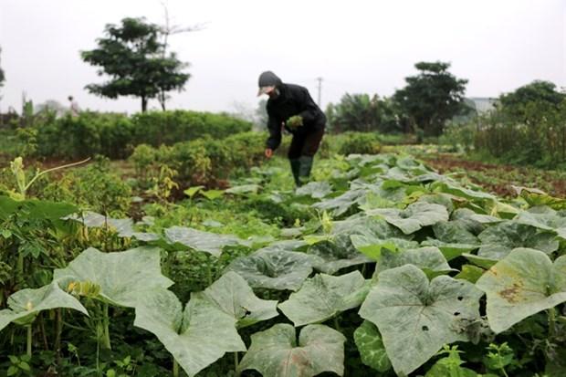 Heat, urbanisation hit capital's farms hinh anh 1