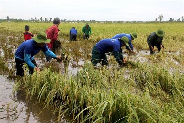 Early floods threaten Mekong rice fields hinh anh 1