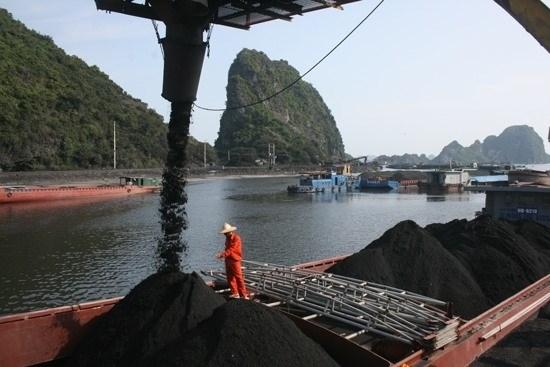 Coal trans-shipment port gets green-light hinh anh 1