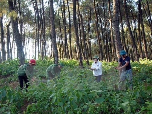 Natural forest development remains unattractive to businesses hinh anh 1