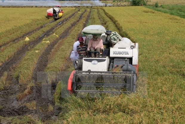 Glutinous rice exports to China slowing down hinh anh 1