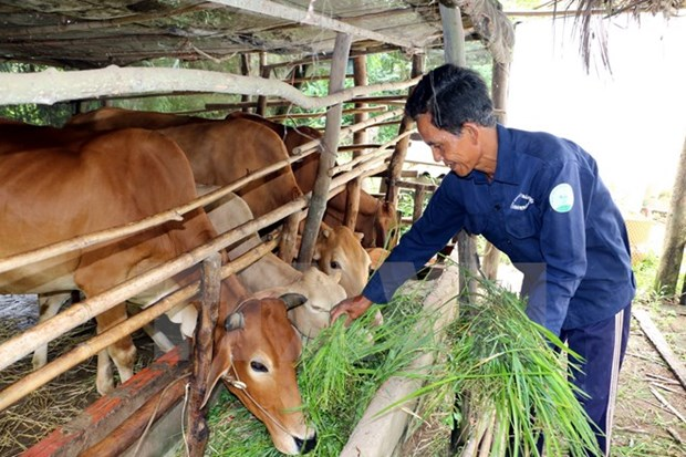Ben Tre strives for sustainable poverty alleviation hinh anh 1