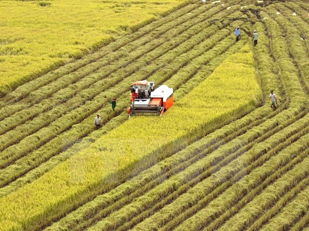 Huge potential for Vietnam's rice exports to Singapore hinh anh 1