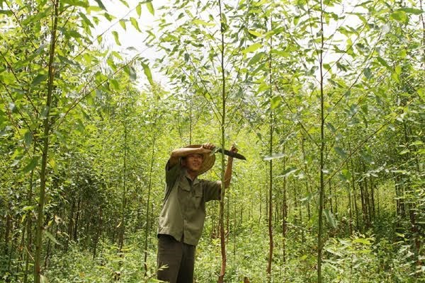 Land, forest allocation policy proves effective hinh anh 1
