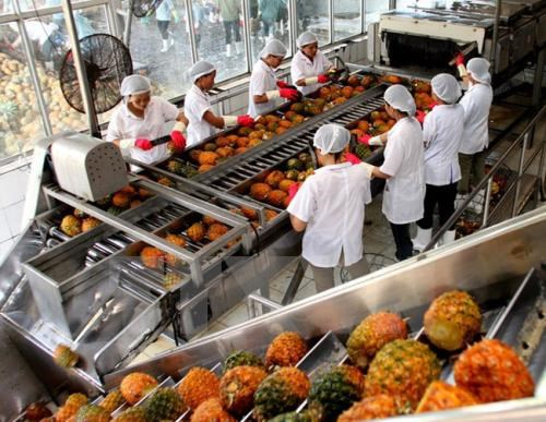 Cultivation growth predicted to reach 2.05 percent in 2017 hinh anh 1