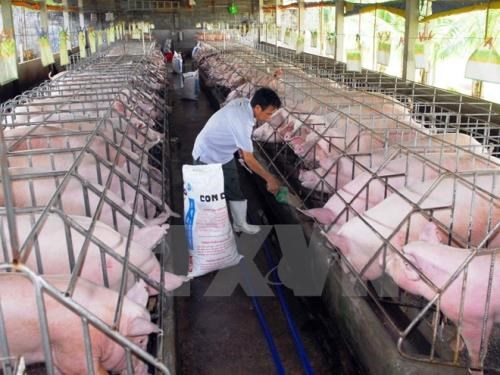 Vietnam tops ASEAN in animal feed production hinh anh 1