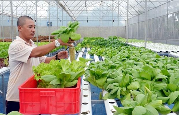 High-tech farming development sluggish hinh anh 1