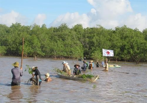 Soc Trang: Mangrove co-management model proven effective hinh anh 1