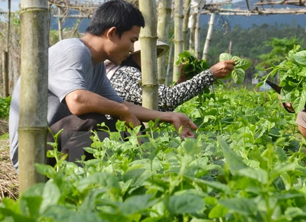 Bac Giang invests 1.5 trillion VND in hi-tech agriculture hinh anh 1