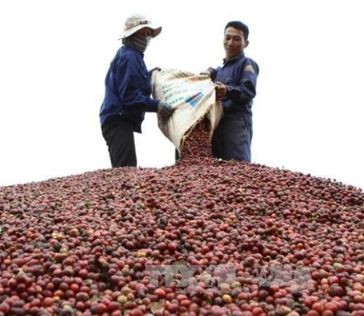 Tata builds freeze-dried coffee plant in Vietnam hinh anh 1