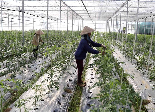 Cooperatives told to improve competitiveness hinh anh 1