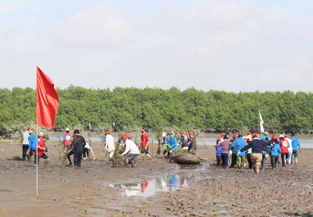Japanese, Quang Ninh Red Cross volunteers plant mangrove forest hinh anh 1