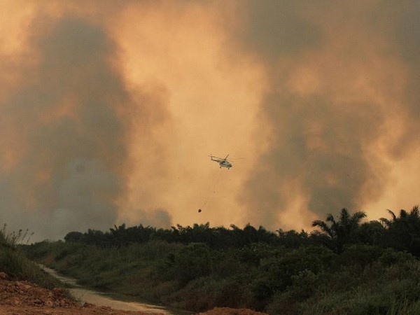 Indonesia works to end forest fires hinh anh 1