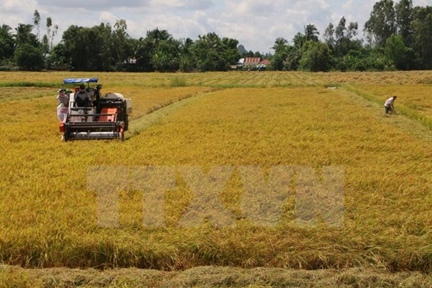 FAO pledges continuous support for Vietnam hinh anh 1