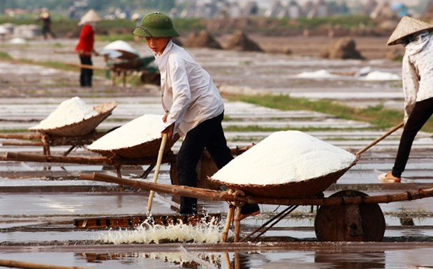 Salt farmers struggle with weak crops hinh anh 1