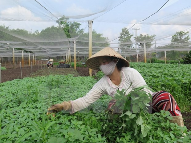 Vegetable exports in August hit nearly 300 million USD hinh anh 1