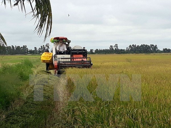Summer-autumn rice crop output hits record in Long An hinh anh 1
