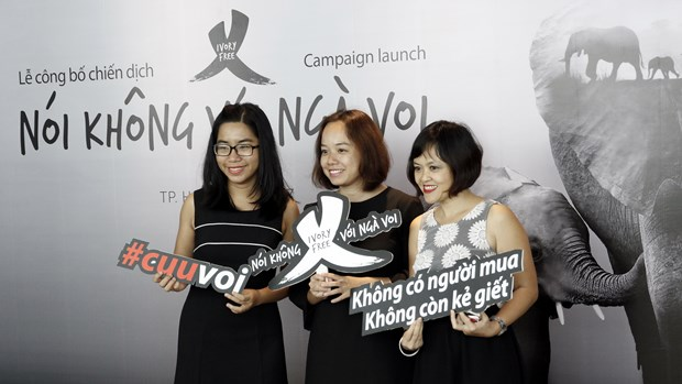 """Say No to Ivory"" campaign launched to protect elephants hinh anh 1"