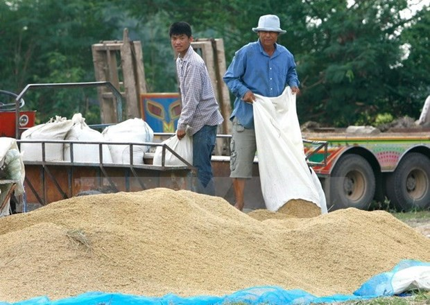 Thailand remains world's biggest rice exporter hinh anh 1