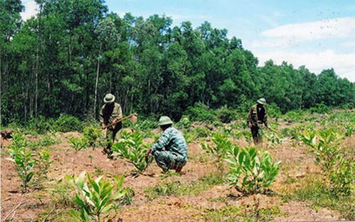 Localities step up forest planting hinh anh 1