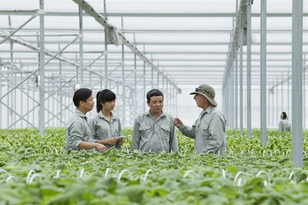 Vietnam seeks global help to lift agriculture sector hinh anh 1