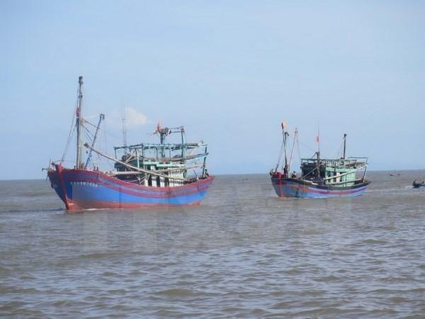 Binh Dinh fishermen in bumper catch hinh anh 1