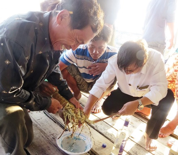 Lobster farmers march onward despite difficulties hinh anh 1