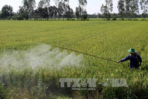 Thua Thien-Hue targets 5,500 hectares of large-scale fields hinh anh 1