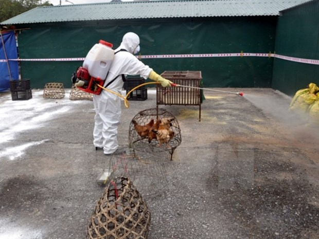 Vietnam takes preventive measures against bird flu hinh anh 1