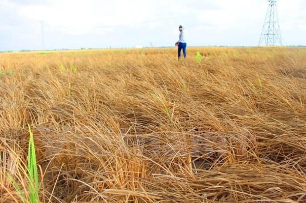 Tra Vinh shares climate change-adapted livelihoods models hinh anh 1