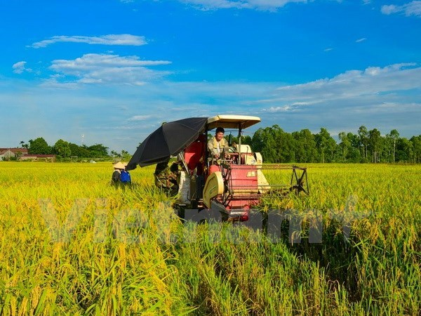 Vietnam's 2017 rice production estimated at 44.1 million tonnes hinh anh 1