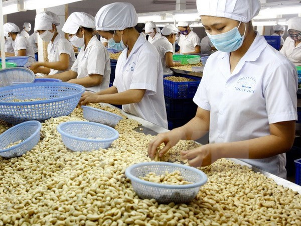 Cashew exports in eight months fetch 2.2 billion USD hinh anh 1