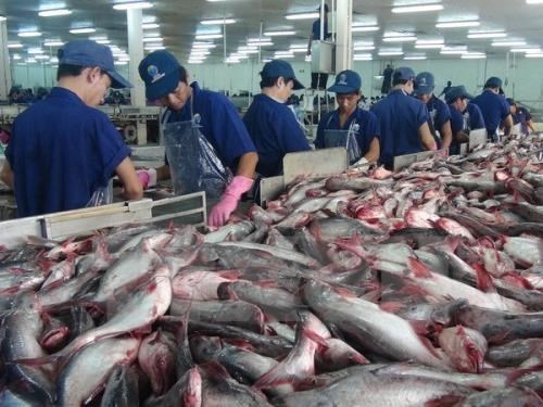 US raises anti-dumping duties on Vietnam's frozen catfish fillets hinh anh 1