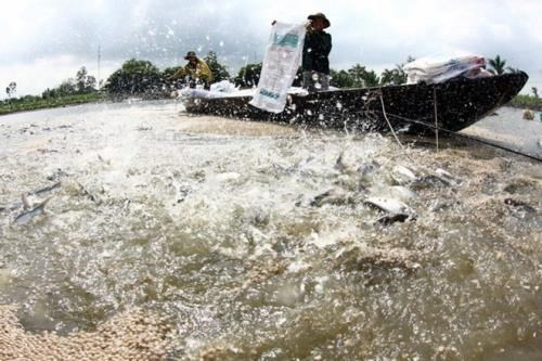 Vietnam steps up aquaculture cooperation with Cambodia hinh anh 1