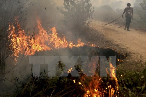 Indonesia detects 27 forest fire hotspots hinh anh 1