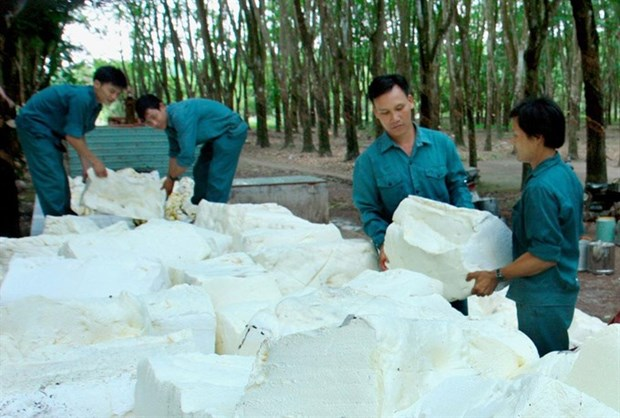 Vietnam's top rubber firm valued at 177.8 million USD hinh anh 1
