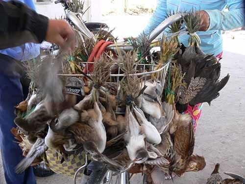 Bird trade escalating in Vietnam: study hinh anh 1