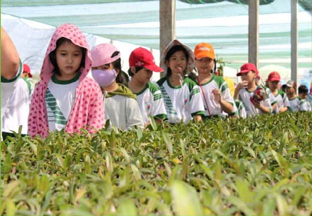 HCM City seeks solutions to promote agriculture tourism hinh anh 1