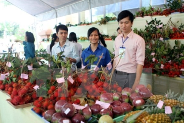 Vegetable, fruit exports hoped to hit record high hinh anh 1
