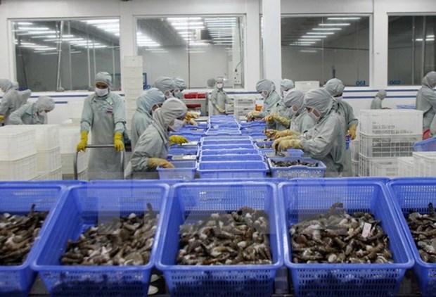 EU becomes Vietnam's top shrimp importer hinh anh 1