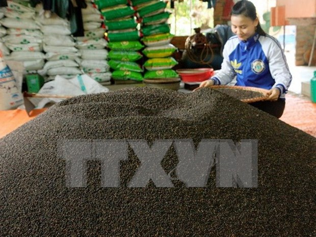 Businesses encouraged to invest in large-scale pepper production hinh anh 1