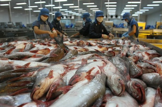 Price of material tra fish surges hinh anh 1